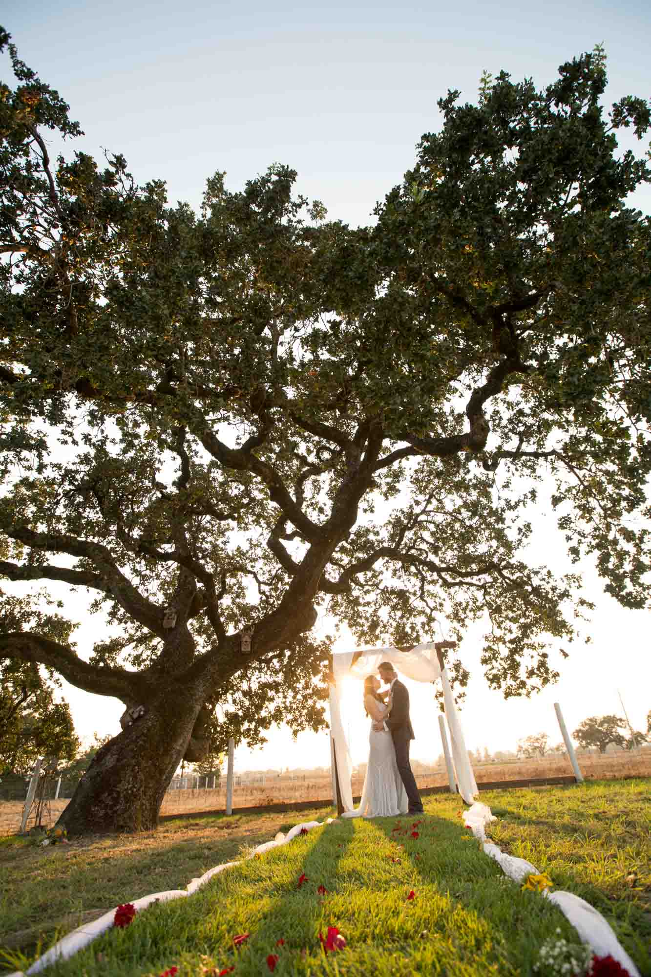 couple embracing under an alter and framed by an oak tree